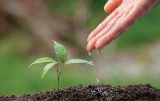 perfect planting